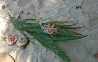 Барбекю, креветки, пляж | Движение - Жизнь