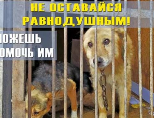 Помощь животным.