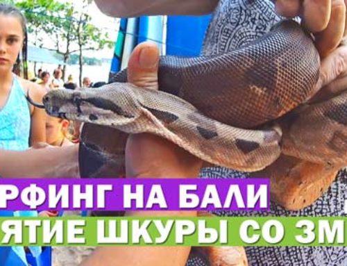 Серфинг на Бали. День 3. Снятие шкуры со змеи. Вкусное йогуртовое мороженое. Цены №19