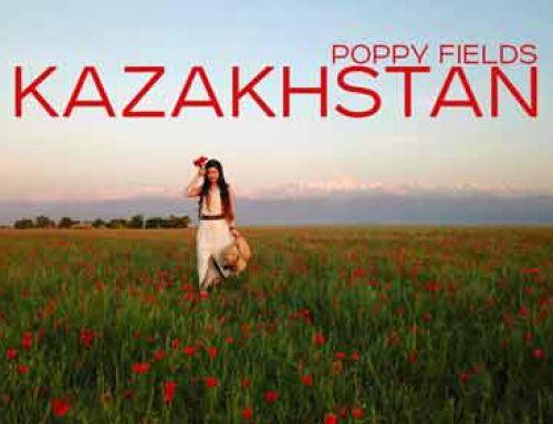 Красивые маковые поля вблизи Алматы. С видом на горы Заилийского Алатау и Пик Талгар.