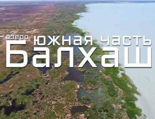 Озеро Балхаш (южная часть). Обзор дороги, села Караой, реки Нарын и Или.